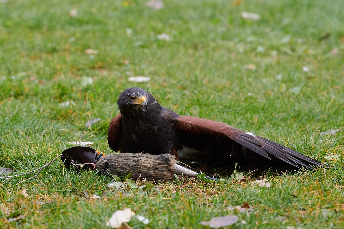 Greifvogelpark Aigner's Falkenhof